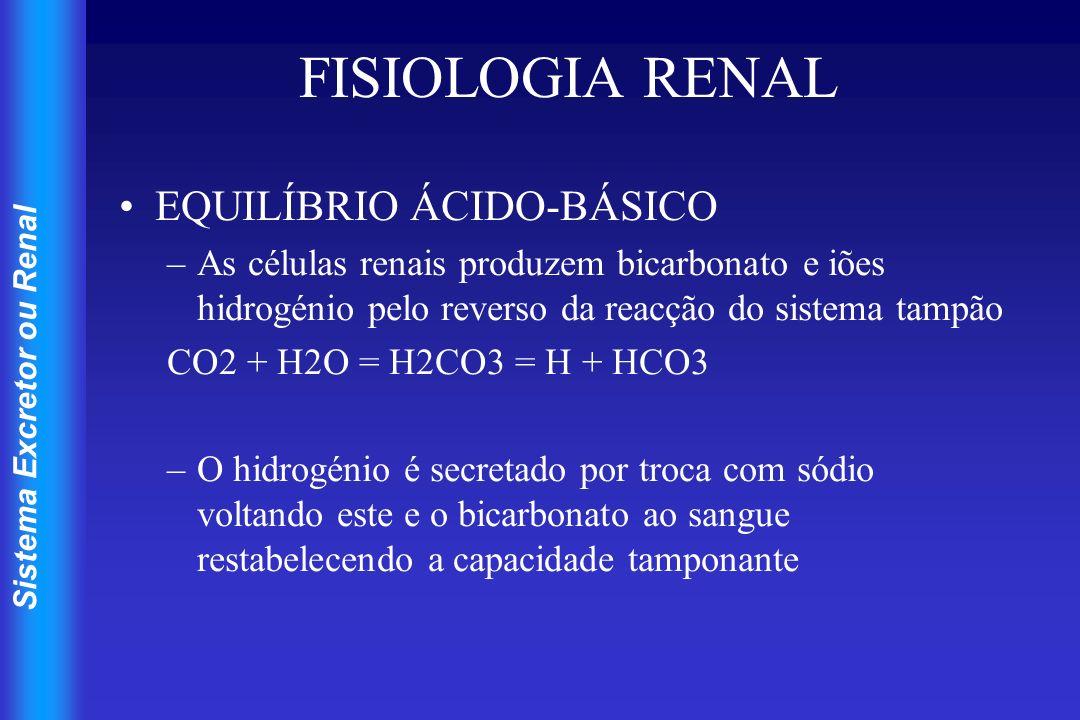 FISIOLOGIA RENAL EQUILÍBRIO ÁCIDO-BÁSICO
