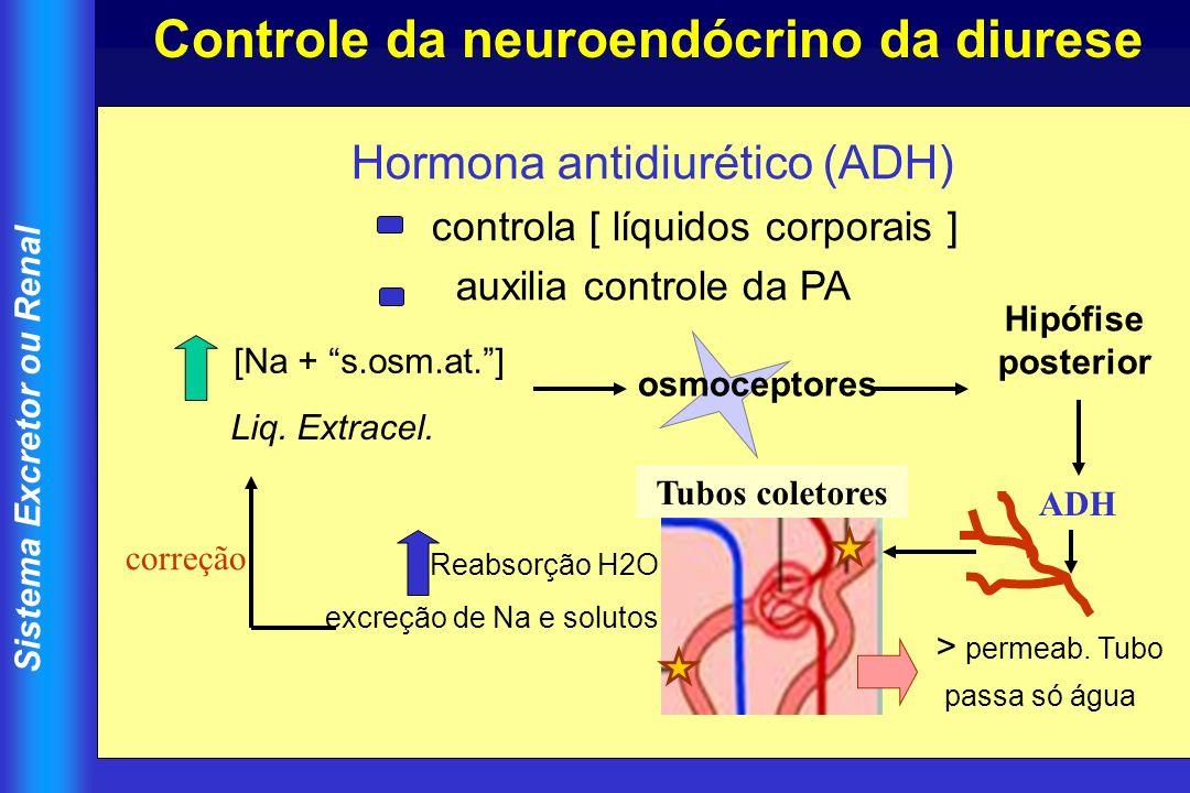 Controle da neuroendócrino da diurese
