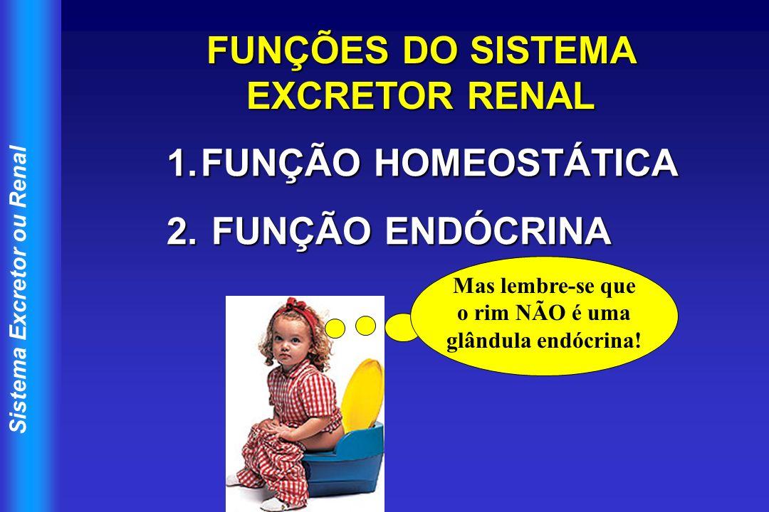 FUNÇÕES DO SISTEMA EXCRETOR RENAL