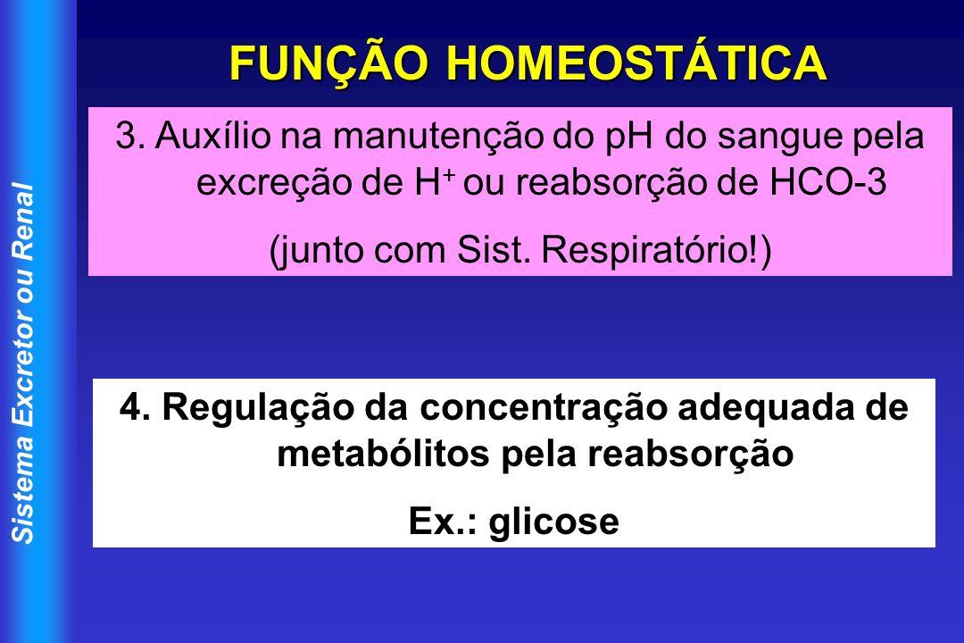 4. Regulação da concentração adequada de metabólitos pela reabsorção