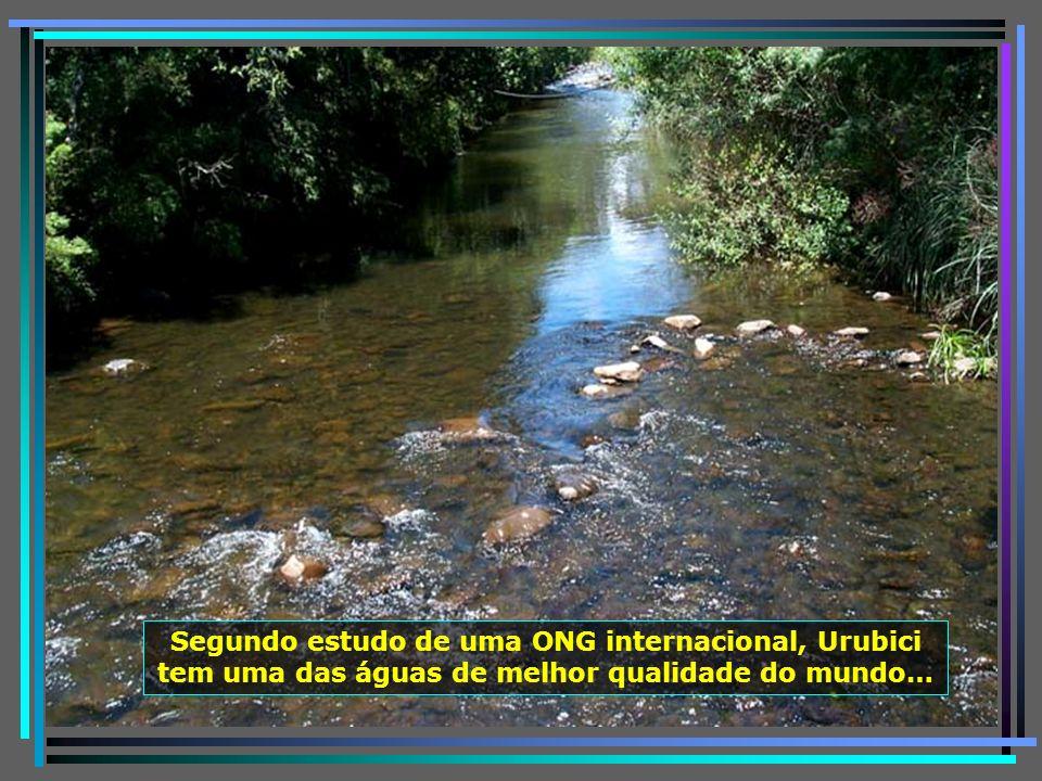 P0011254 - URUBICI - RIO URUBICI-650