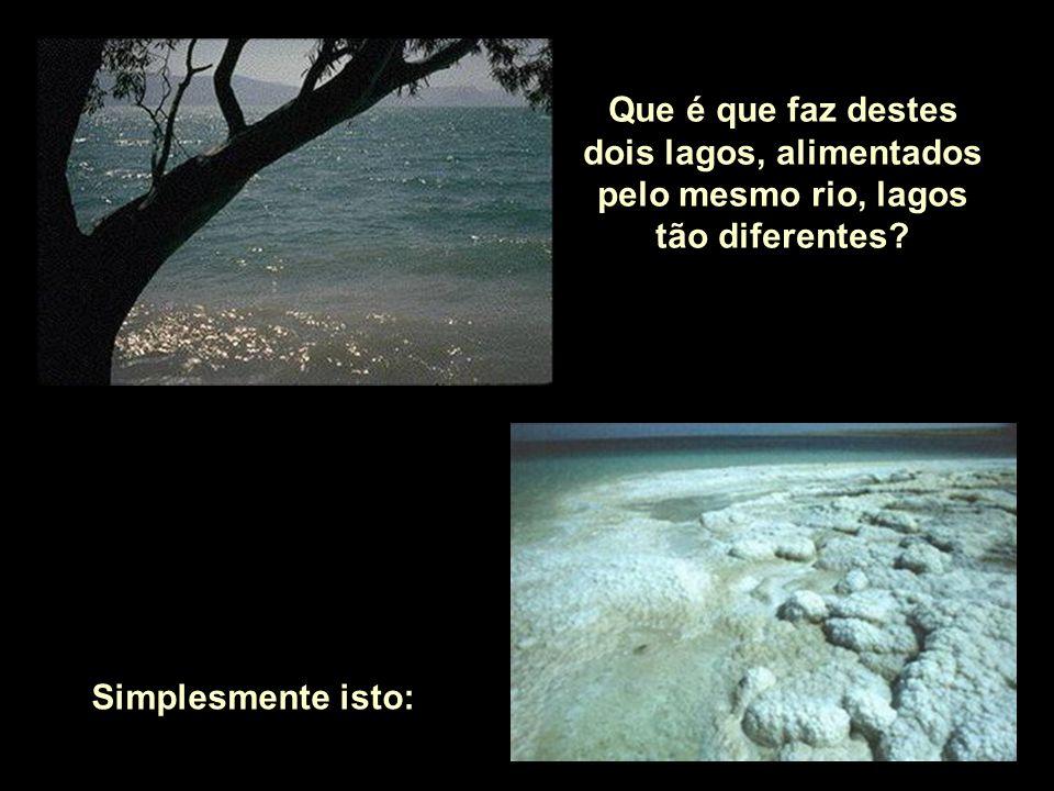 Que é que faz destes dois lagos, alimentados pelo mesmo rio, lagos tão diferentes
