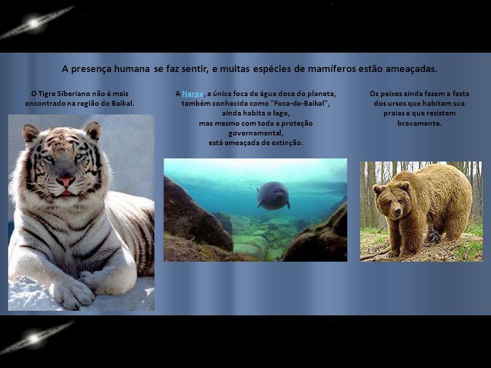 A presença humana se faz sentir, e muitas espécies de mamíferos estão ameaçadas.