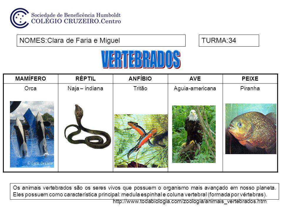 VERTEBRADOS NOMES:Clara de Faria e Miguel TURMA:34 MAMÍFERO RÉPTIL