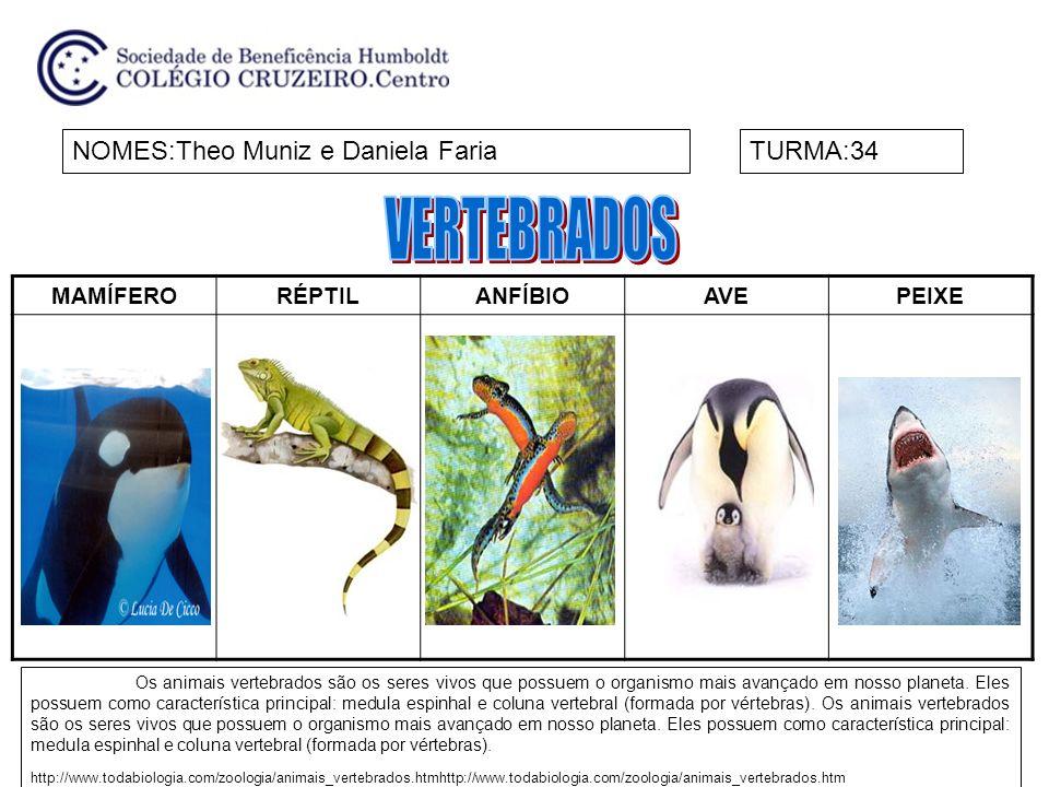 VERTEBRADOS NOMES:Theo Muniz e Daniela Faria TURMA:34 MAMÍFERO RÉPTIL