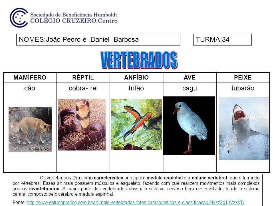 VERTEBRADOS NOMES:João Pedro e Daniel Barbosa TURMA:34 cão cobra- rei