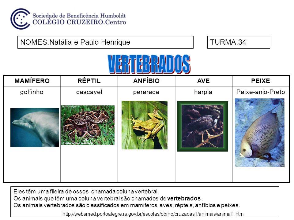 VERTEBRADOS NOMES:Natália e Paulo Henrique TURMA:34 MAMÍFERO RÉPTIL