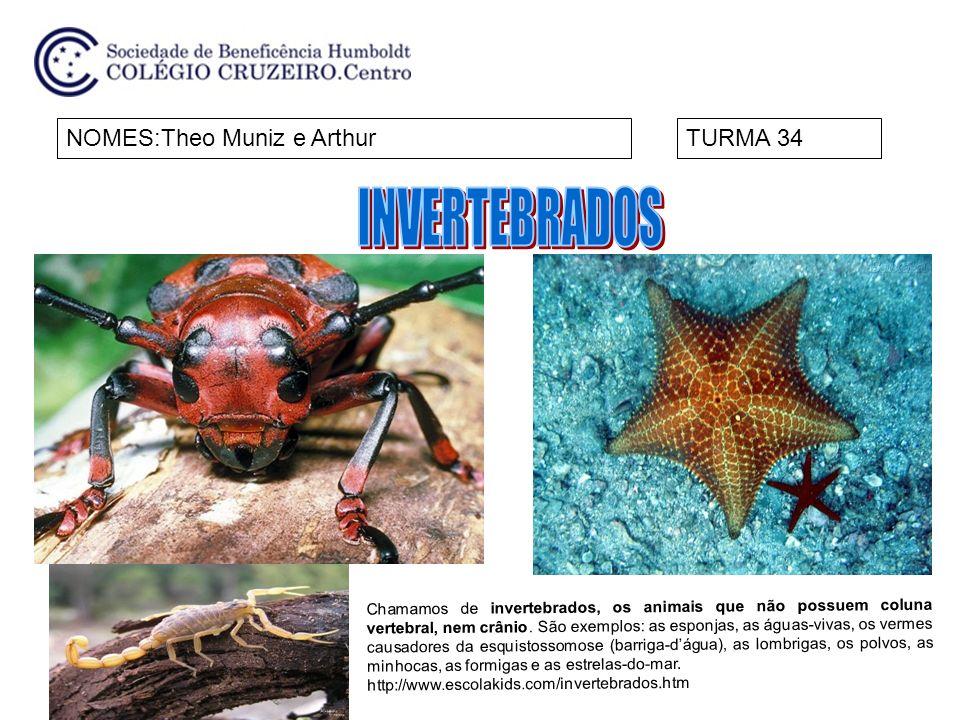 INVERTEBRADOS NOMES:Theo Muniz e Arthur TURMA 34