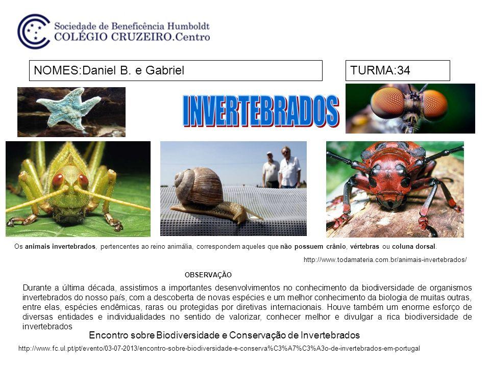 Encontro sobre Biodiversidade e Conservação de Invertebrados