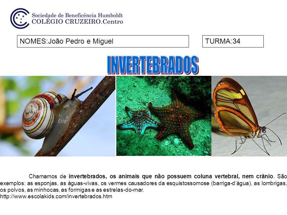 INVERTEBRADOS NOMES:João Pedro e Miguel TURMA:34