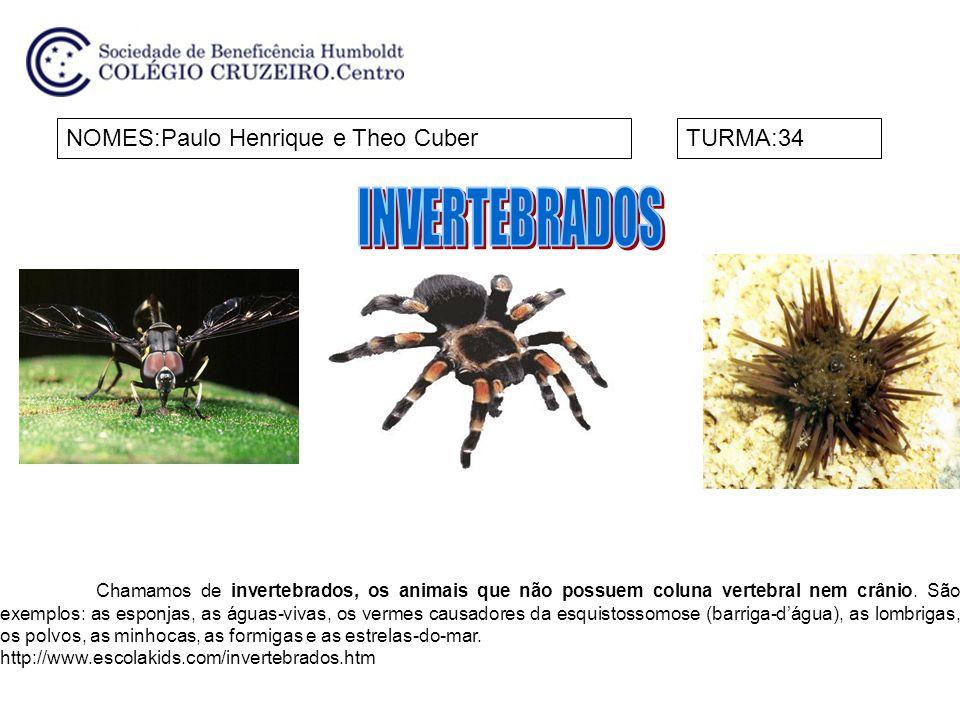 INVERTEBRADOS NOMES:Paulo Henrique e Theo Cuber TURMA:34