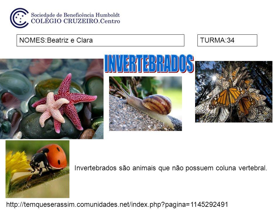 INVERTEBRADOS NOMES:Beatriz e Clara TURMA:34