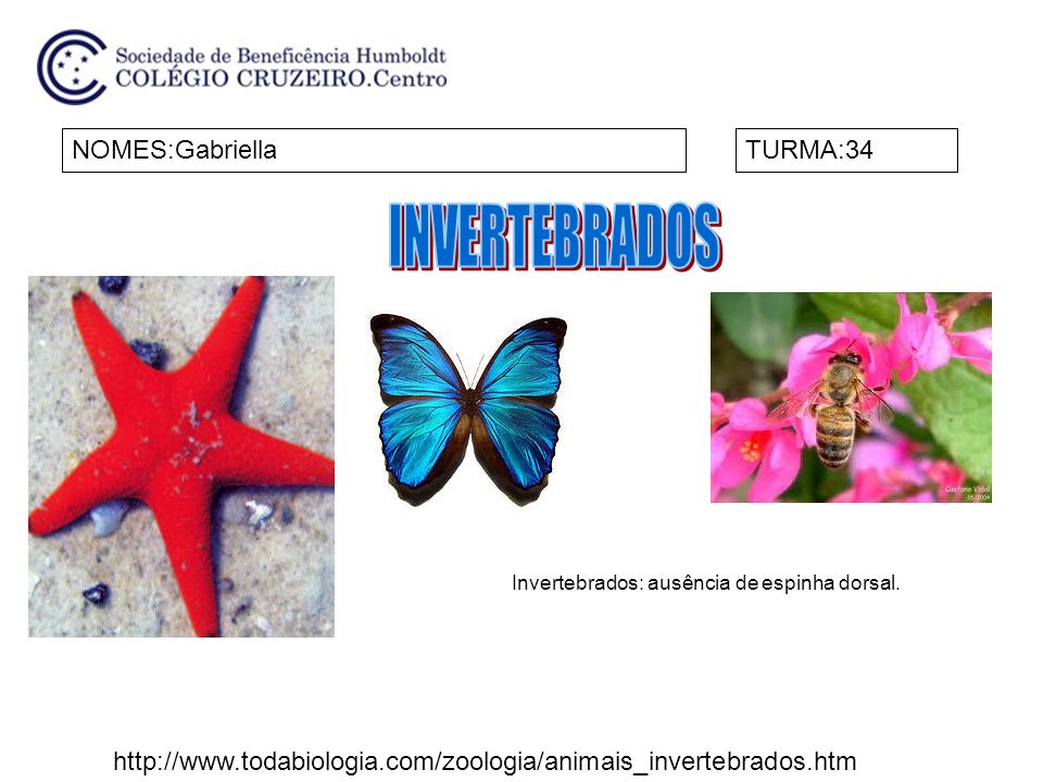 Invertebrados: ausência de espinha dorsal.