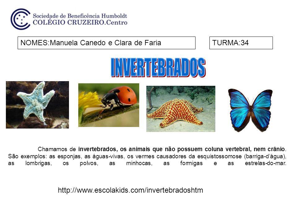 INVERTEBRADOS NOMES:Manuela Canedo e Clara de Faria TURMA:34