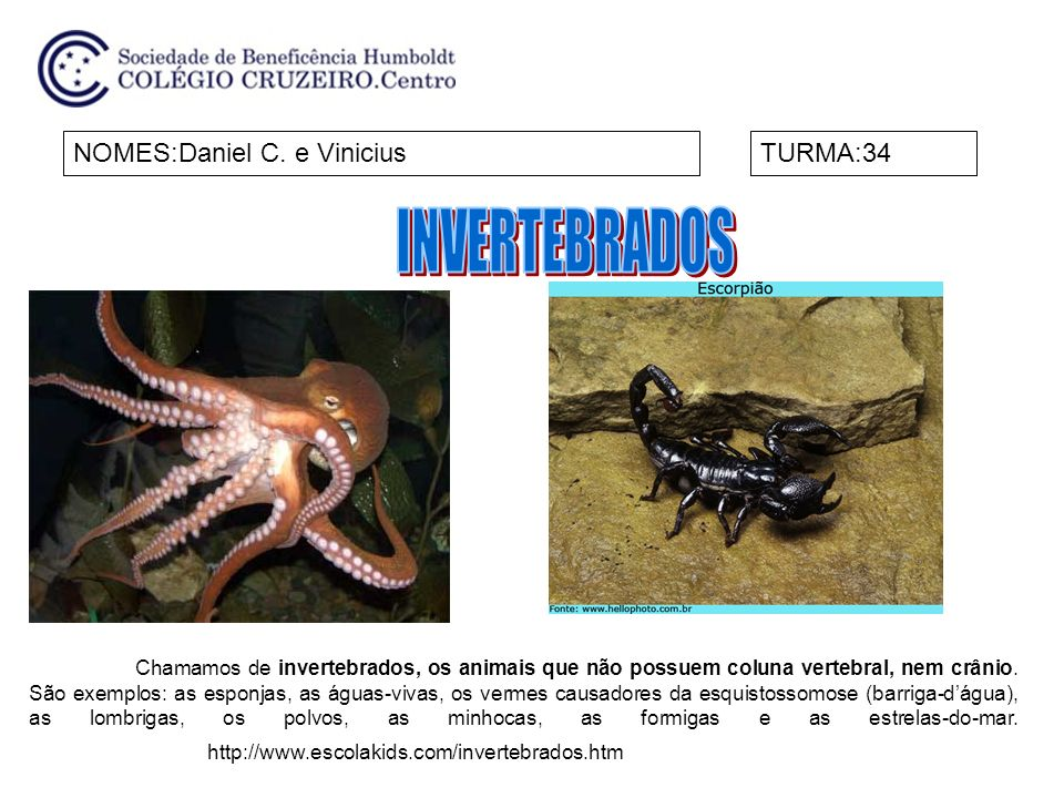 INVERTEBRADOS NOMES:Daniel C. e Vinicius TURMA:34