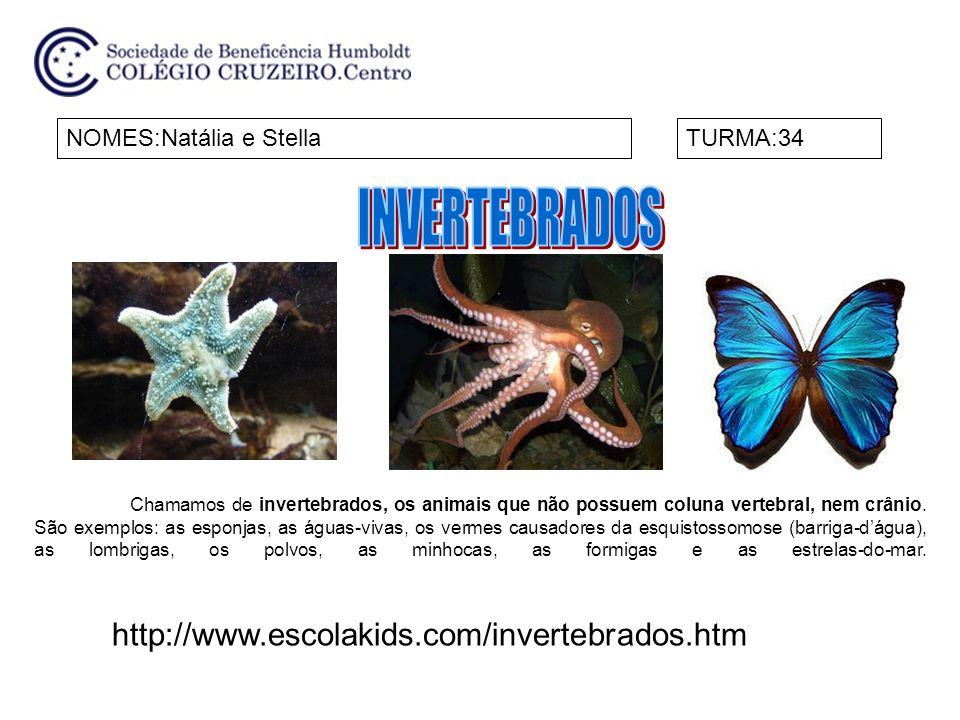 INVERTEBRADOS http://www.escolakids.com/invertebrados.htm