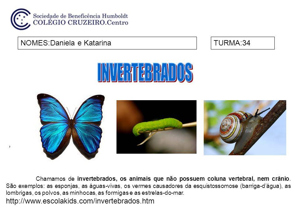 INVERTEBRADOS NOMES:Daniela e Katarina TURMA:34 ,