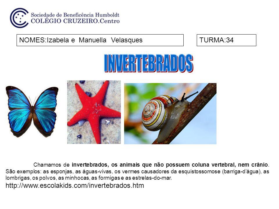 INVERTEBRADOS NOMES:Izabela e Manuella Velasques TURMA:34