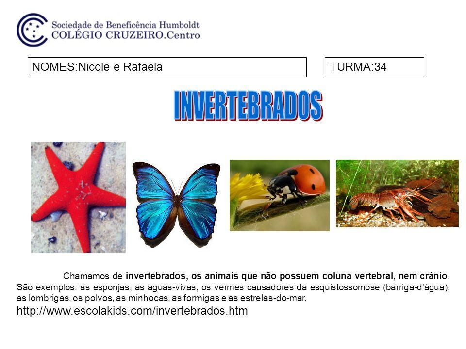 INVERTEBRADOS NOMES:Nicole e Rafaela TURMA:34