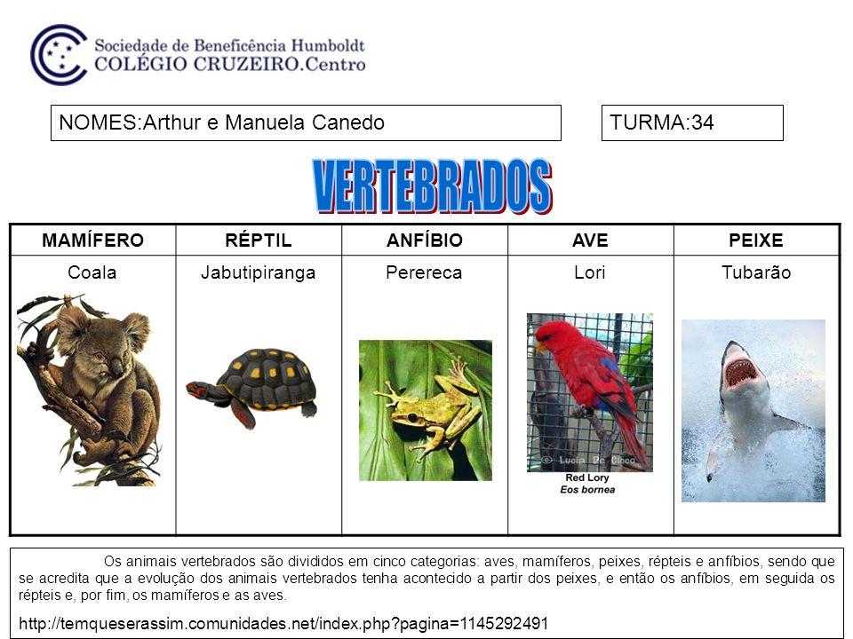 VERTEBRADOS NOMES:Arthur e Manuela Canedo TURMA:34 MAMÍFERO RÉPTIL