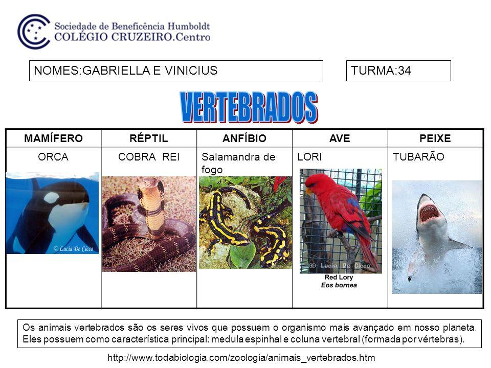 VERTEBRADOS NOMES:GABRIELLA E VINICIUS TURMA:34 MAMÍFERO RÉPTIL