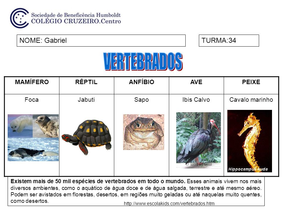 VERTEBRADOS NOME: Gabriel TURMA:34 MAMÍFERO RÉPTIL ANFÍBIO AVE PEIXE