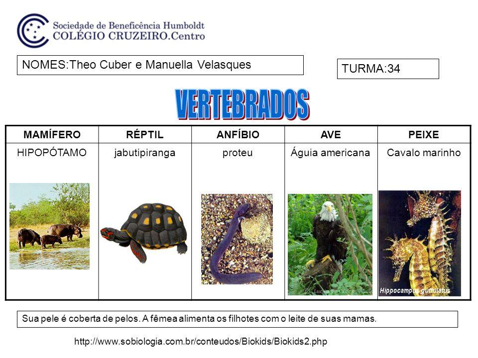 VERTEBRADOS NOMES:Theo Cuber e Manuella Velasques TURMA:34 MAMÍFERO