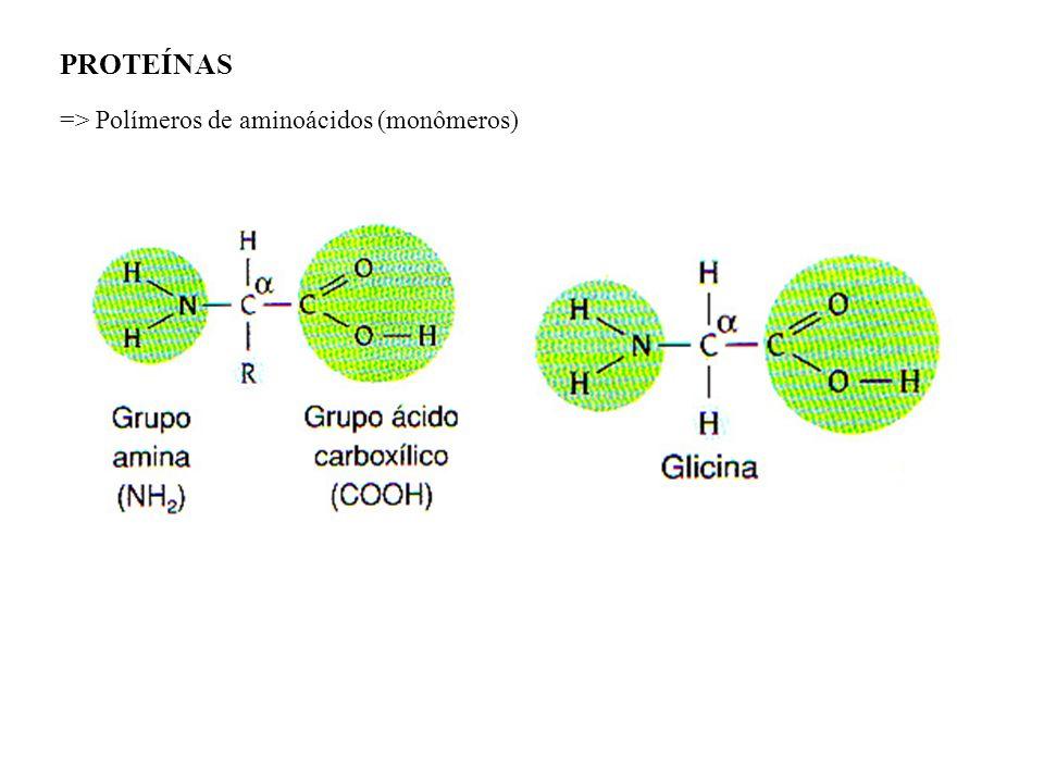 PROTEÍNAS => Polímeros de aminoácidos (monômeros)