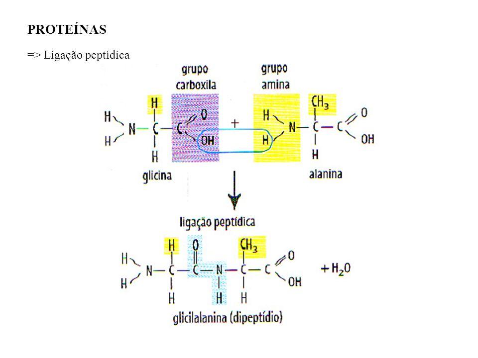 PROTEÍNAS => Ligação peptídica
