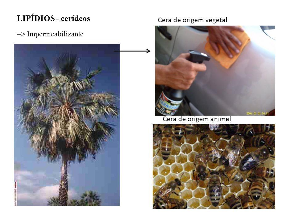 LIPÍDIOS - cerídeos Cera de origem vegetal => Impermeabilizante