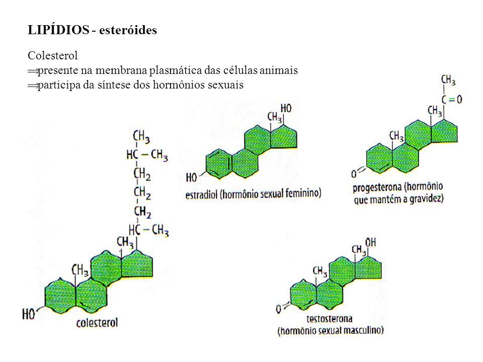 LIPÍDIOS - esteróides Colesterol