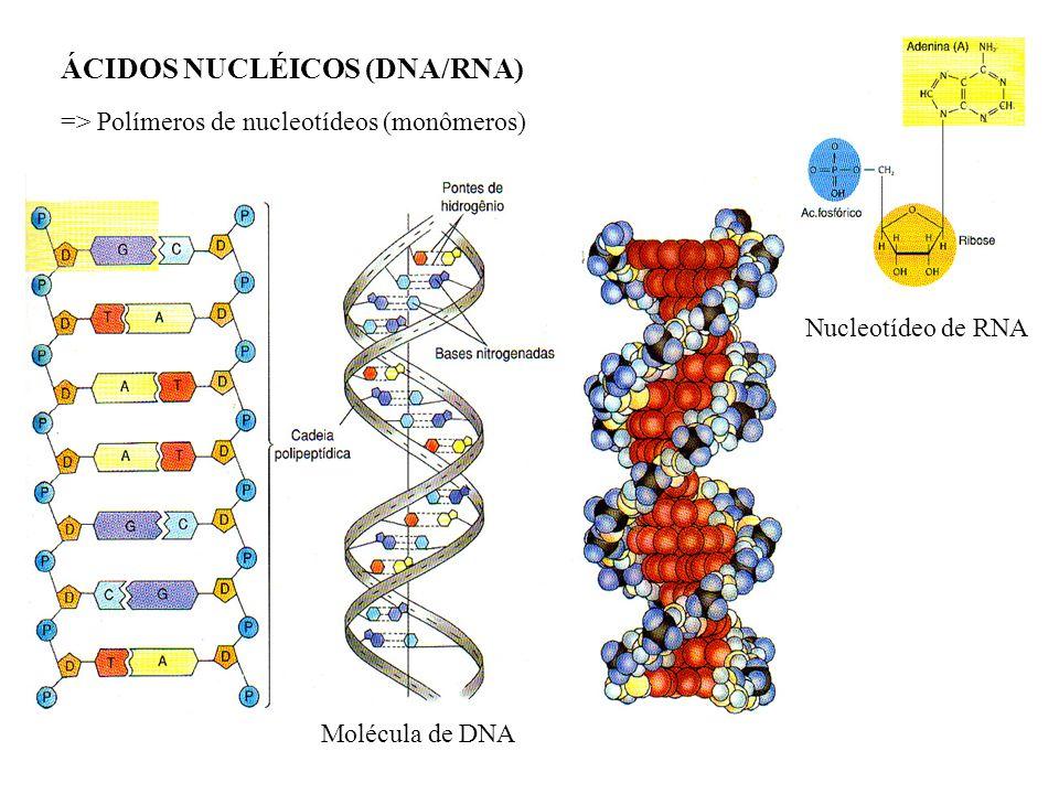 ÁCIDOS NUCLÉICOS (DNA/RNA)