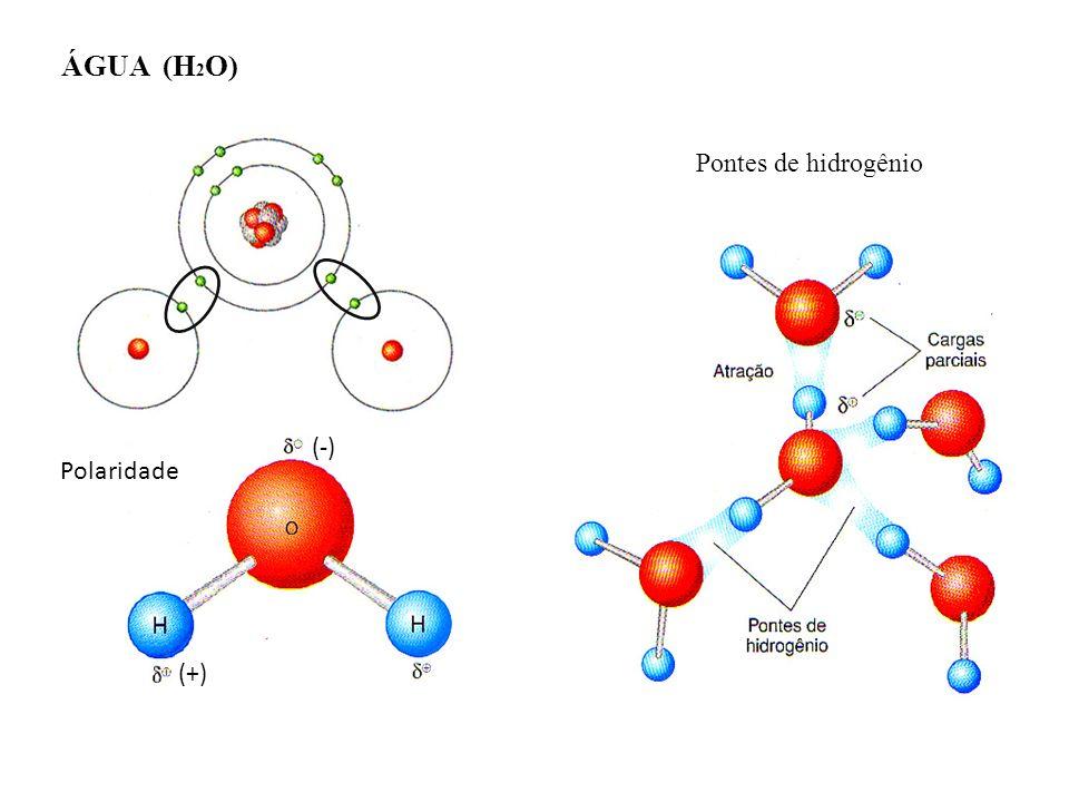 ÁGUA (H2O) Pontes de hidrogênio (-) Polaridade (+)