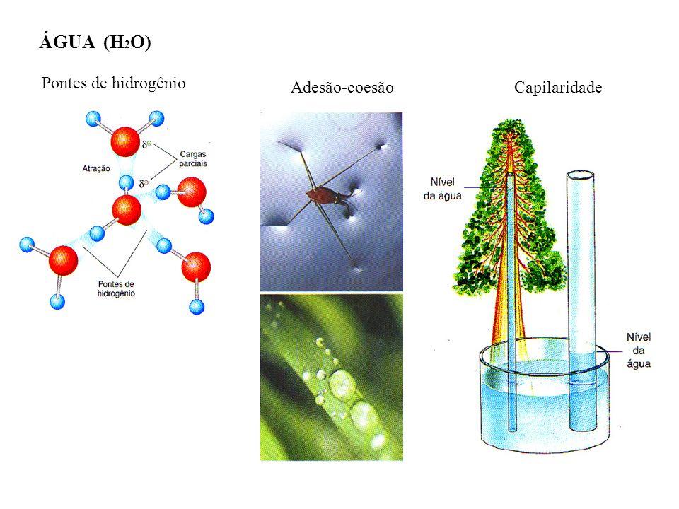 ÁGUA (H2O) Pontes de hidrogênio Adesão-coesão Capilaridade