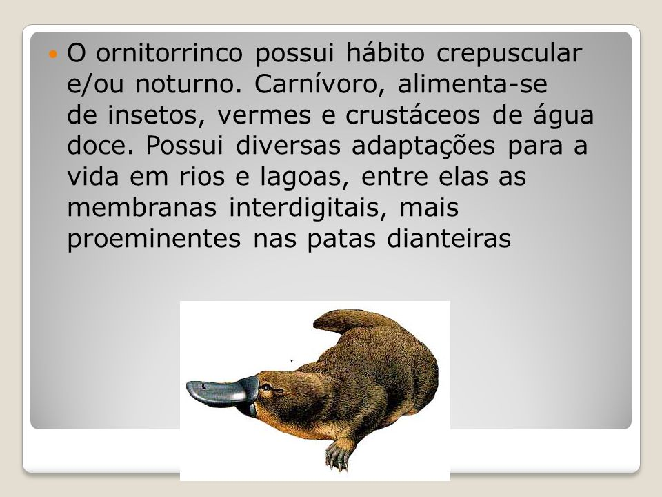 O ornitorrinco possui hábito crepuscular e/ou noturno