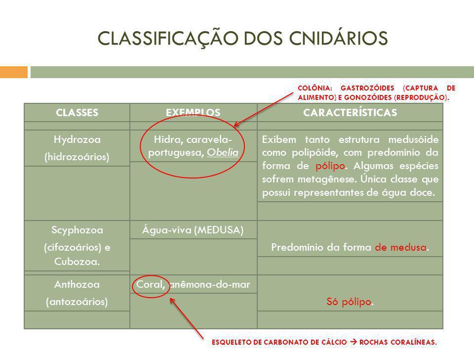 CLASSIFICAÇÃO DOS CNIDÁRIOS