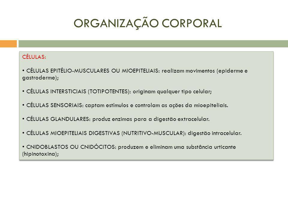 ORGANIZAÇÃO CORPORAL CÉLULAS: