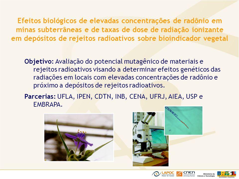 Efeitos biológicos de elevadas concentrações de radônio em minas subterrâneas e de taxas de dose de radiação ionizante em depósitos de rejeitos radioativos sobre bioindicador vegetal