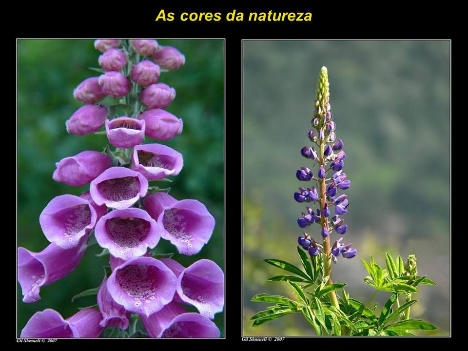 As cores da natureza