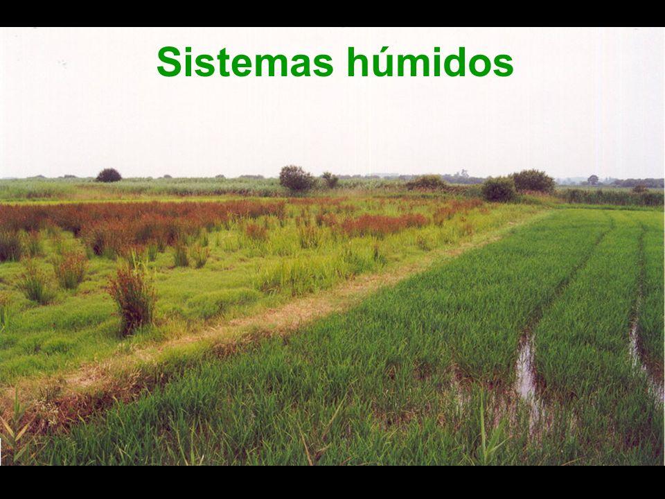 Sistemas húmidos