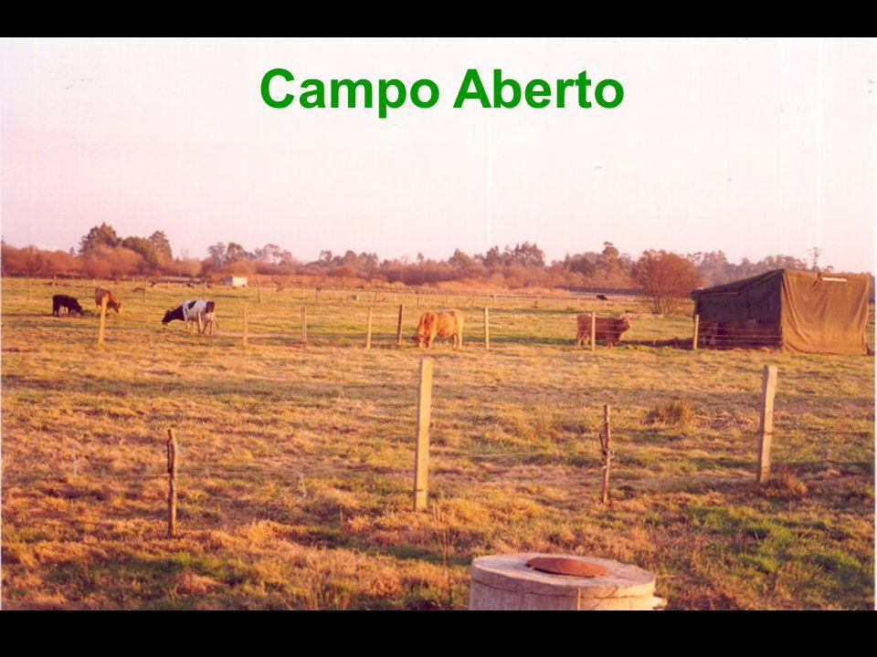 Campo Aberto