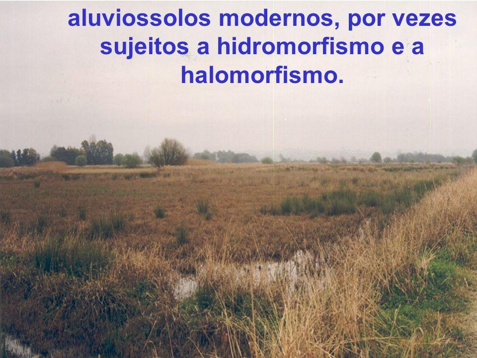 aluviossolos modernos, por vezes sujeitos a hidromorfismo e a halomorfismo.