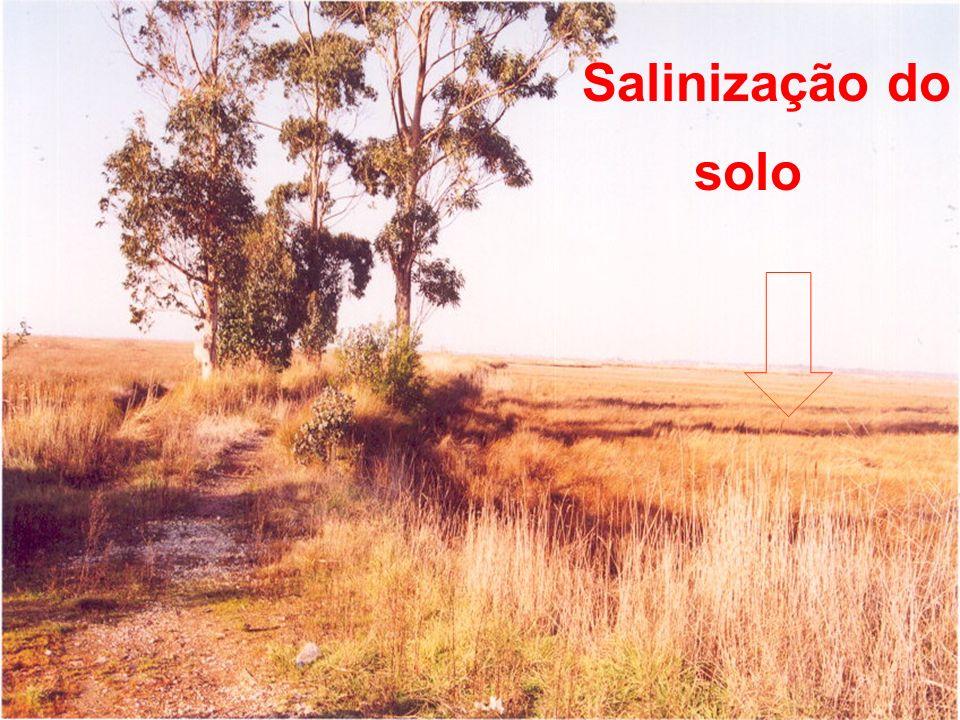 Salinização do solo