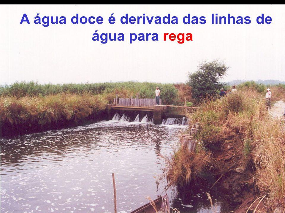A água doce é derivada das linhas de água para rega