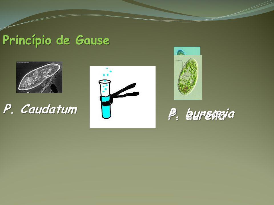 Princípio de Gause P. Caudatum P. bursaria P. aurelia