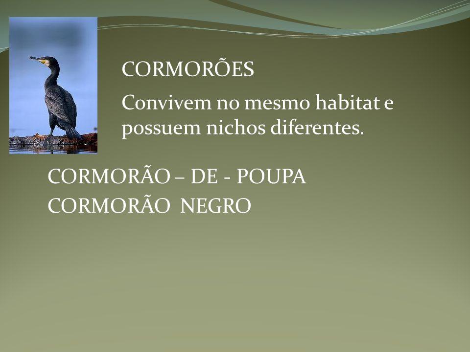 CORMORÕES Convivem no mesmo habitat e possuem nichos diferentes.
