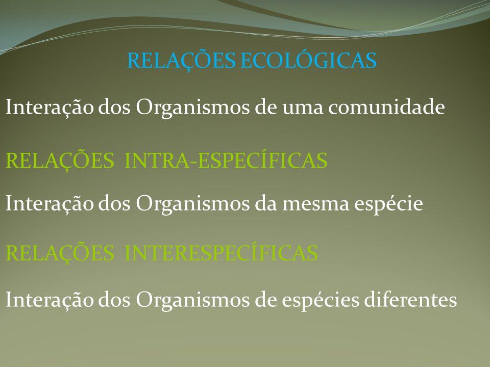 RELAÇÕES ECOLÓGICAS Interação dos Organismos de uma comunidade. RELAÇÕES INTRA-ESPECÍFICAS. Interação dos Organismos da mesma espécie.
