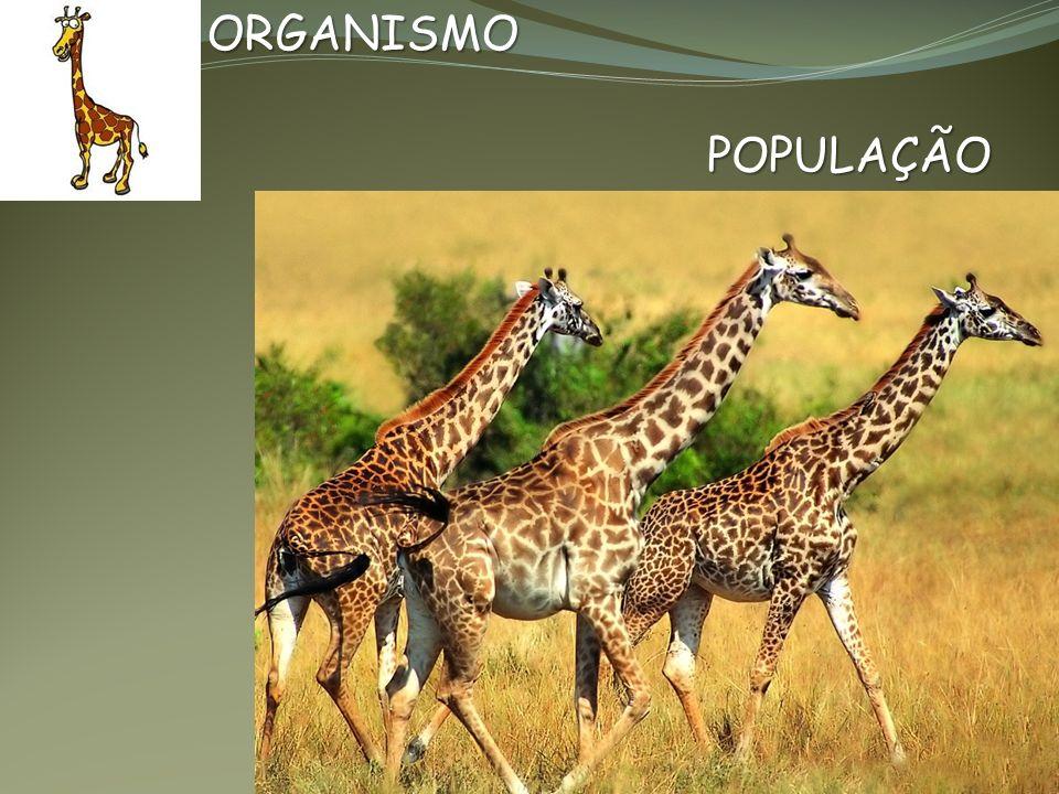 ORGANISMO POPULAÇÃO