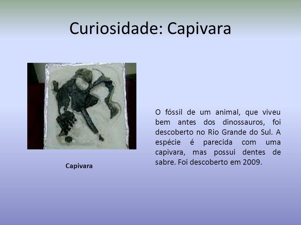 Curiosidade: Capivara