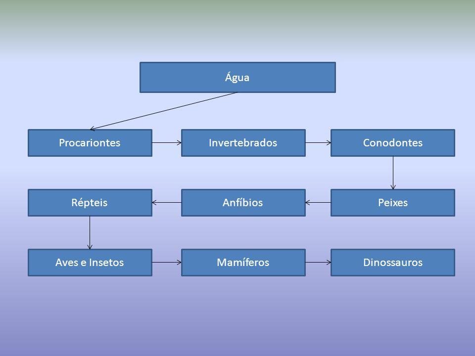 Água Procariontes. Invertebrados. Conodontes. Répteis. Anfíbios. Peixes. Aves e Insetos. Mamíferos.